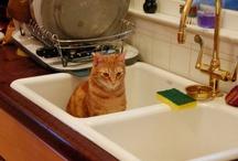 Animals In Sinks