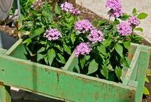 farm flowers... / beautiful down home flower arrangements in interesting vessels...