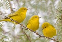 for the love of birds... / i love birds...