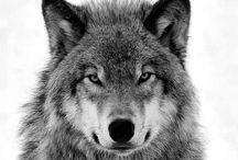 ⠀⠀⠀⠀⠀Dogs/Wolfs