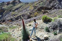 Tenerife y sus cositas... Únicas e irrepetibles