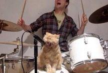 CAT & DOG &