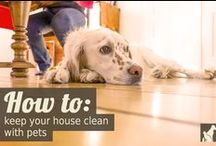 Tips for Pet Parents