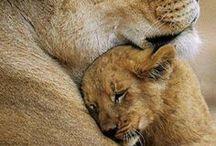 felines - nature motherhood