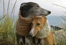 Woof Woof Woof / Man's best friend