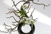 Modern / Corporate Floral Arrangements / Modern floral and greenery arrangements. Corporate arrangements. Corporate decor. Modern decor / by Monique Lacour