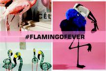 Inspiração :: Flamingos