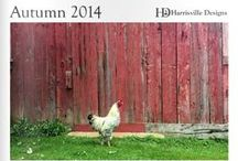 Autumn 2014 Pattern Collection / Just released! Harrisville Design's Collection of knitting patterns for the fall season.