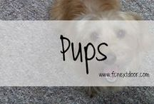 PUPS / Everything Dog || Puppies, Dogs, Products, etc.