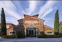 Amedei Worldwide / Amedei Tuscany