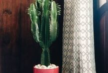 Cactos   Flores   Plantas / AMO