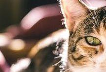 Minha gata   Mini / Minha gatinha