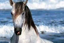 horses / belos cavalos
