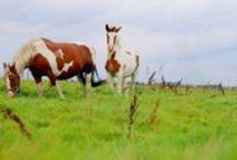 Animals / My private photos. Do it myself :-)