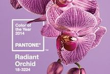 Radiant Orchid | Colour of the Year