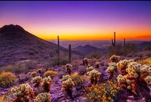 Phoenix Love / We love living in the Valley of the Sun. Here's why it's our favorite!