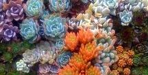 Succulent Color Inspiration