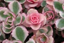 Plant Materials / Interesting plants that lend themselves to horticultural therapy programs.