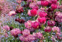 Inspiration: Garden & Plants