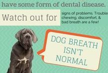 Dental Health for Pets