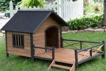 Amazing Pet Spaces