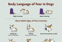 Behavior of Dogs / Dog Behavior