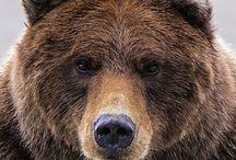Медведи / Мишки разные бывают