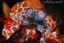 Marine Life / Post on marine life and marine conservation effort