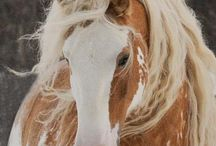 Horses / This board if full of loving energetic majestic creatures known as horses!