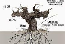 #Enografías #Vino #Enography #Wine / Visual information about everything #wine and #vine // Información visual sobre el mundo del #vino y la #vid