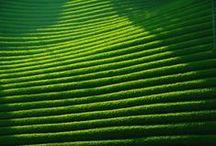 緑 / green-vert