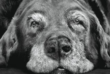 Tribute to Old Dogs