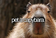 Before I die, I want to..