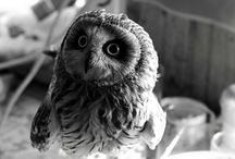 //owls <3//