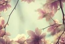 Spring Pastels / Lovely Pastel Products ideal for Spring #podpastels