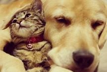 Dogs love cats / Dogs showing love for their BFF cats.