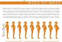 Pregnancy Knowledge Base / Pregnancy infographics, useful information and advice on the nine months of pregnancy