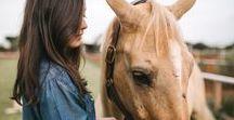 Cavalos / Horses, Photography, Ideas, Horse, Palomino