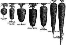 Garden / Vegetable and General gardening tips tricks and knowledge