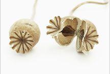 seeds_pods