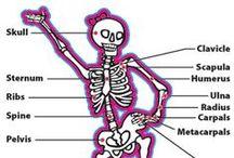 PE:  human body / уроки о здоровье, профилактика вредных привычек, как устроен организм человека