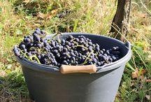 Wein - Wine / Wein ist für mich nicht nur ein Getränk, es ist Genuss und Respekt vor der Arbeit, die dahinter steckt. Cheers!