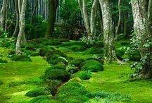 Green. / Playful green.