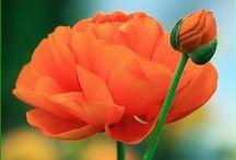 Orange. / Happy orange.