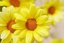 Yellow. / Soulful yellow.