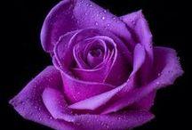 Purple. / Gorgeous purple.