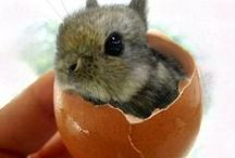 omg adorable! / cute and adorable animals.