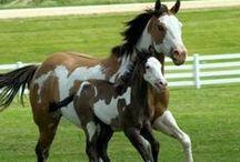Horses / by Marian