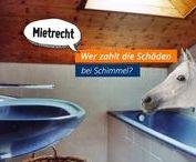 Mietirrtümer Immobilienrecht Immobilien Immobilienmakler / Das sind sie, oft zitierte Mietirrtümer, plakativ dargestellt und verständlich beschrieben. - gefunden und gepinnt vom Makler und Hausverwalter in Hannover: arthax-immobilien.de