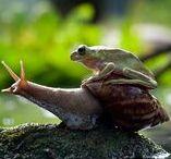 snail / salyangoz